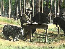 220px-Bear_dinner_1922